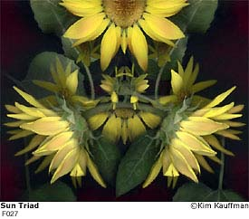 Sun Triad photograph - archival pigment print made from multiple scans of original objects - scanography