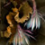 Night Blooming Cereus photograph by photographer Kim Kauffman