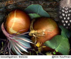 Investigation-Onions photograph collage made from scans of original objects by photographer Kim Kauffman
