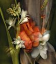 Fanfare from Kim Kauffman's Florilegium photographic series