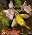 Goldfinch from the Investigation series by Kim Kauffman